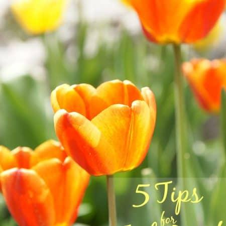 5 Tips for Fool-Proof Gardening #GroSomethingGreater #spon