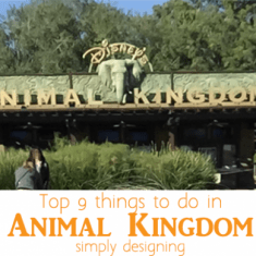 Animal Kingdom | The Top 9 Things to do When You Visit