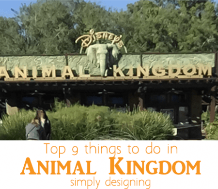 Top 9 things to do in Animal Kingdom