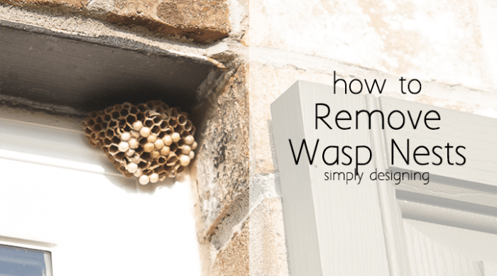 how to get wasp nest out of soffit