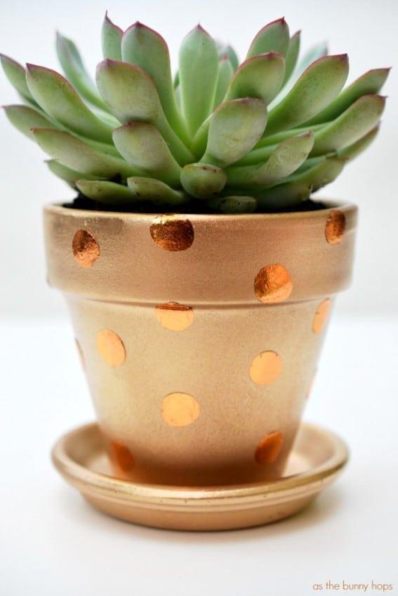 Polka-Dot-Pot-700x1050