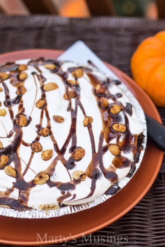 turtle-pumpkin-pie-martys-musings-2