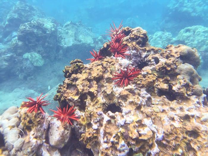 Snorkeling Maui Hawaii