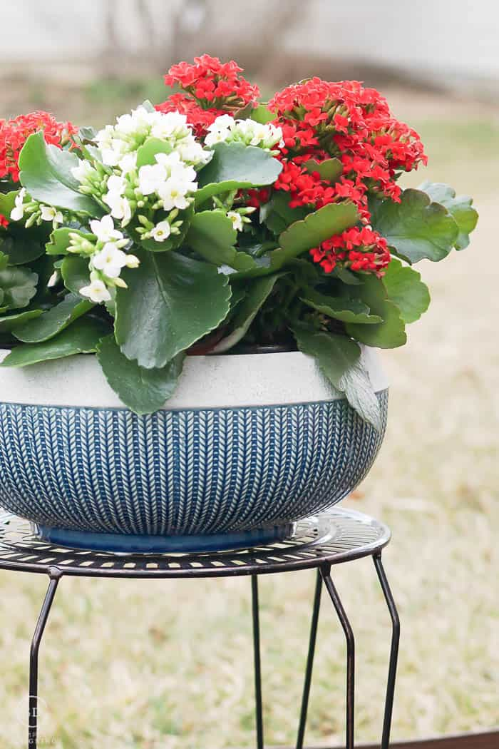 lattice plant stand with planter in teal