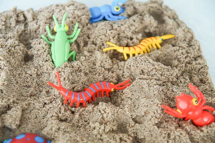 close up of bugs in DIY insect sensory bin