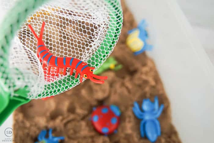 catch bugs in bug sensory activity