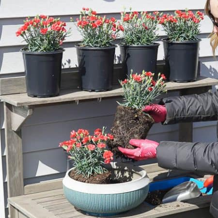 add more flowers to pot