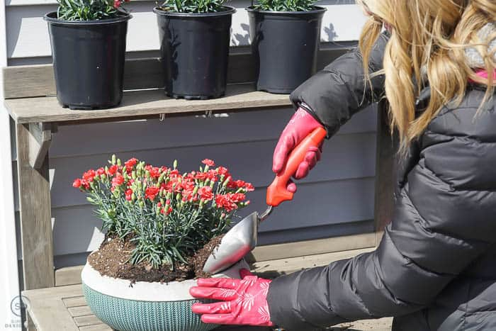 how to pot a plant