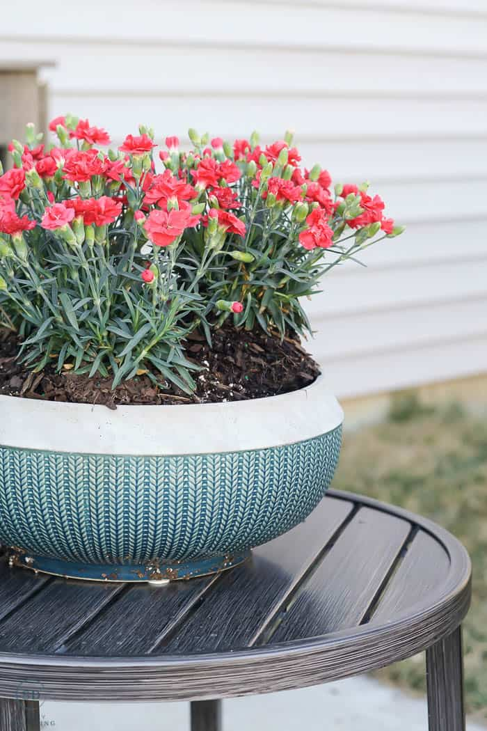 How to Pot a Plant or flowers