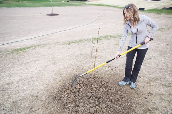 finish putting soil around tree