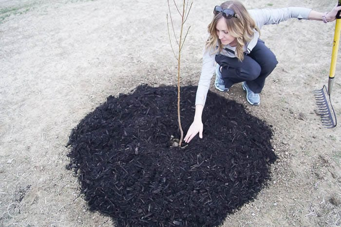 leave space between tree trunk and mulch