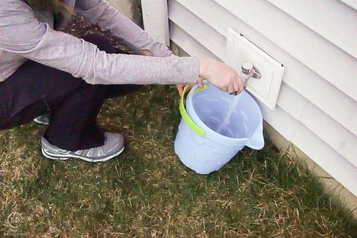 put water in bucket - water tree - how to plant a tree