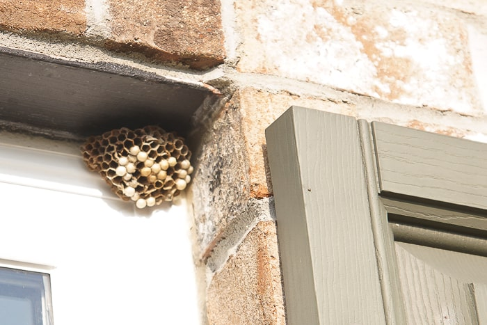 How to Remove Wasp Nests 07067 3 - How To Get Rid Of Wasp Nest In Roof Tiles