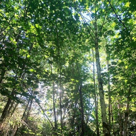 picture of a forest with sun coming through tree branches