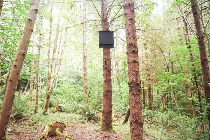 bat house in a forest