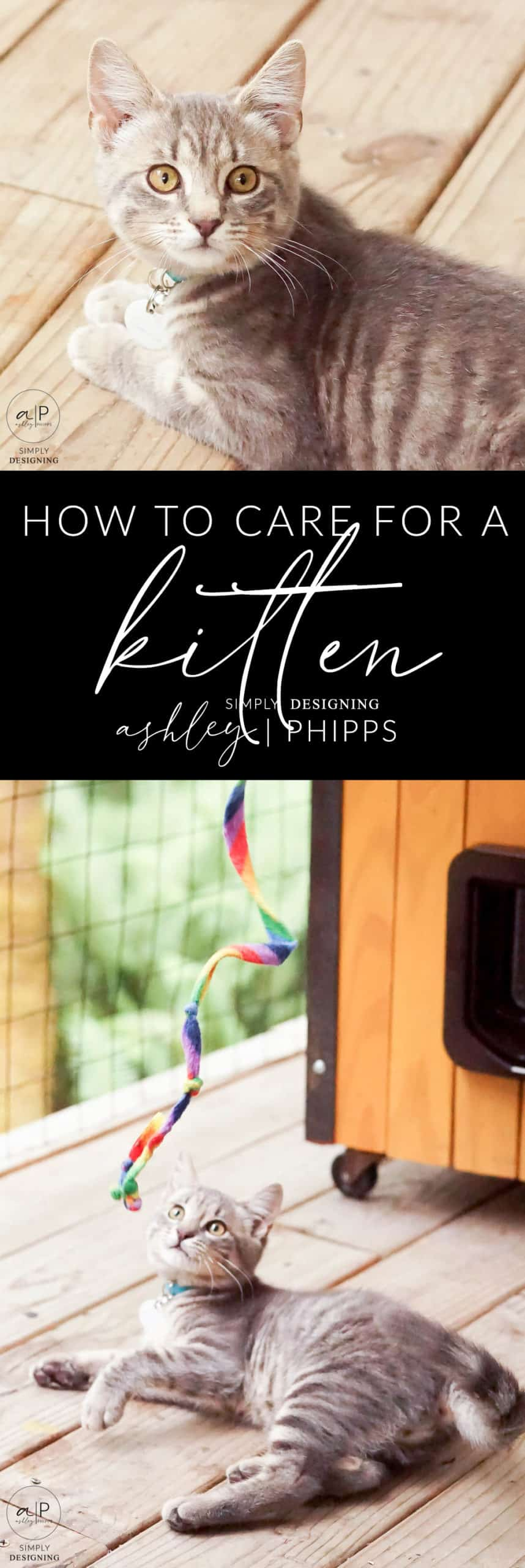 How to Care for a Kitten